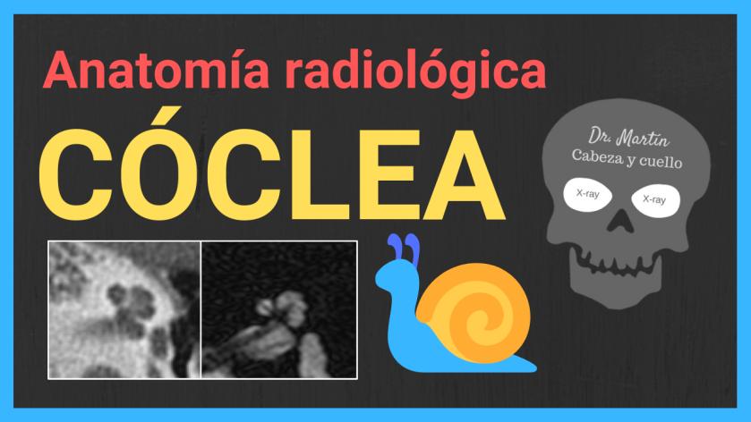 Oido interno 2 cóclea