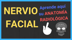 Nervio facial anatomia radiologica