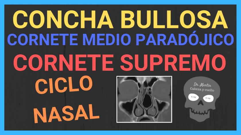 cornetes nasales-variantes