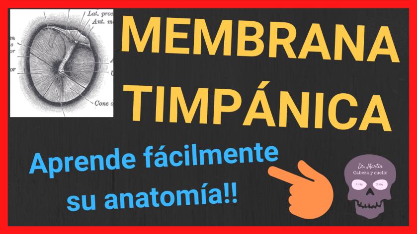 membrana timpanica anatomia