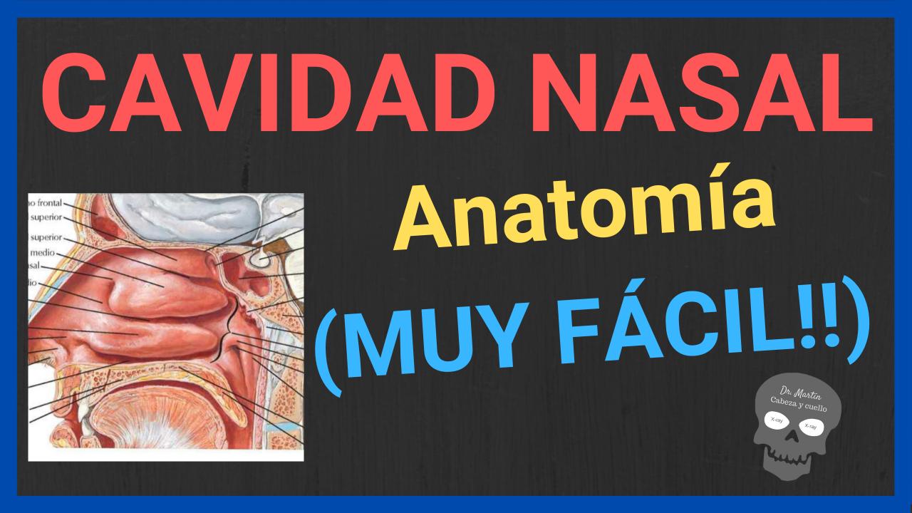 anatomia de la cavidad nasal